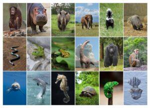 Превью макета метафорических карт Животные